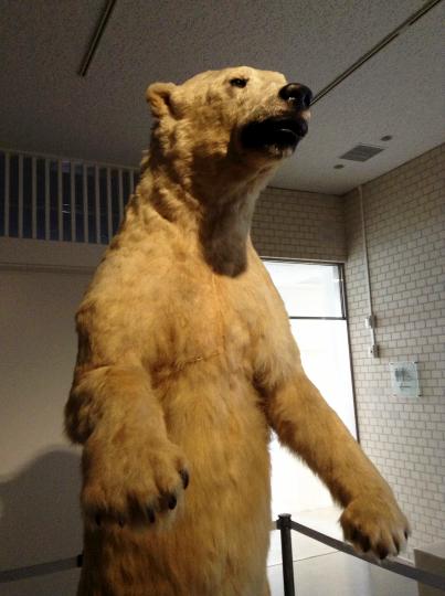 白熊の剥製