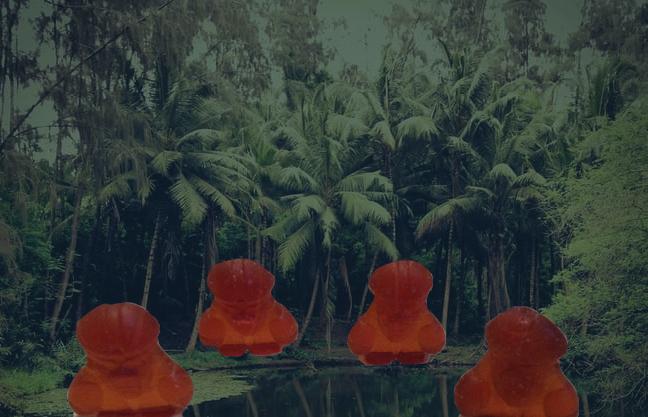 アッガイグミとジャングル